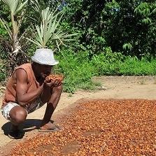 cocoa 41